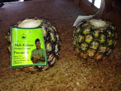 Frankie's Nursery Pineapple