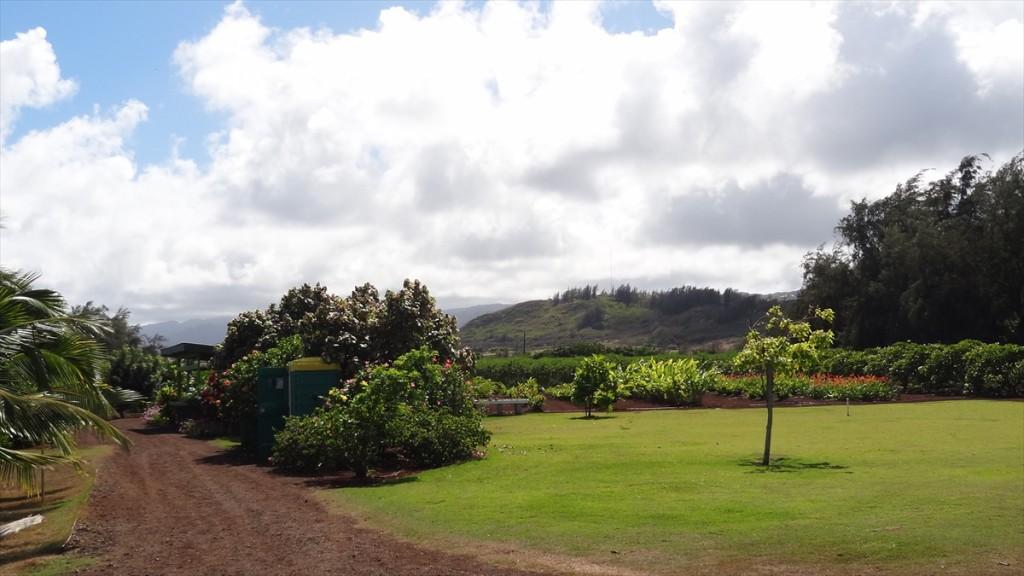 Kahuku Farm