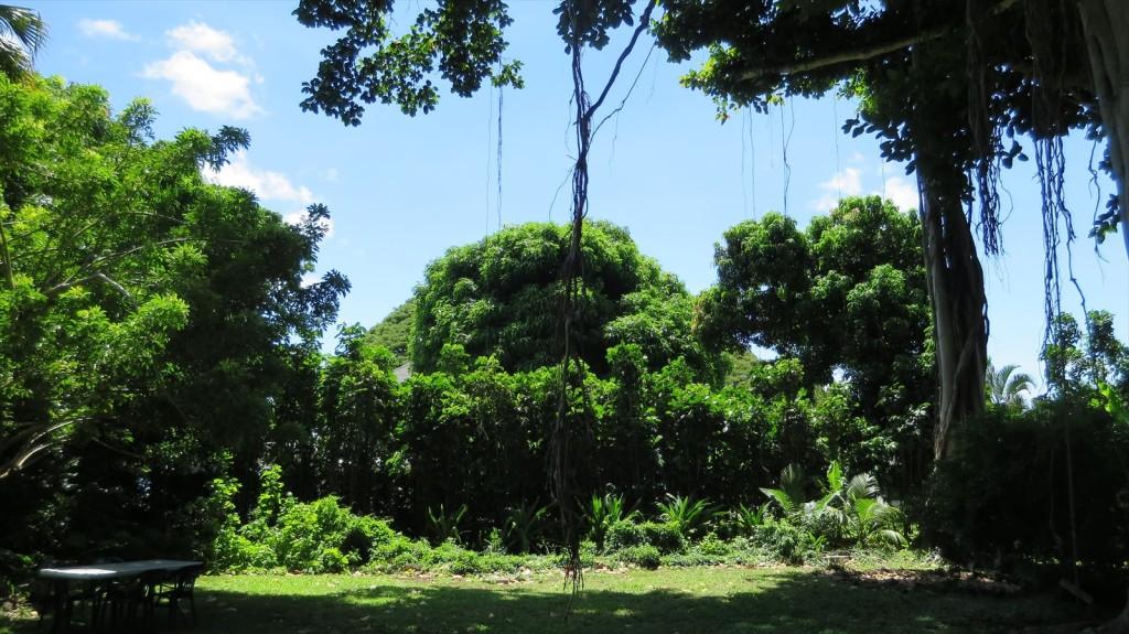 Govinda's Under the Banyan